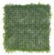 Mur végétal Fougère - Verso